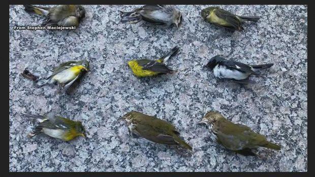Bird Died
