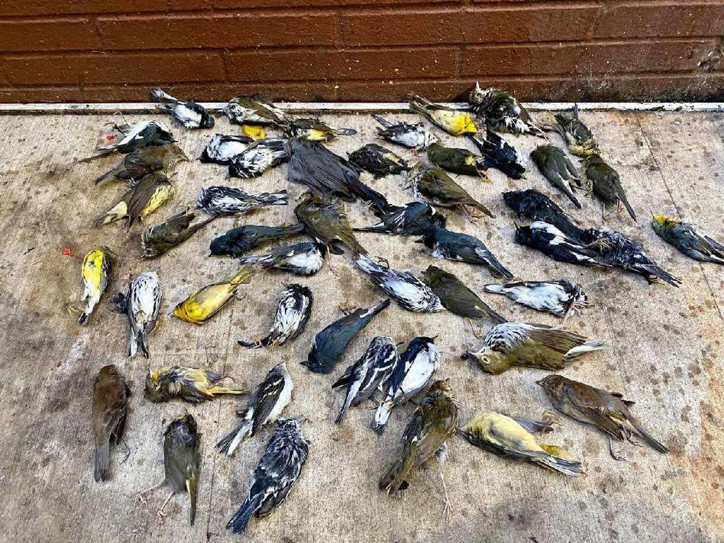 Heboh Ribuan Burung Mati Berjatuhan dari Langit