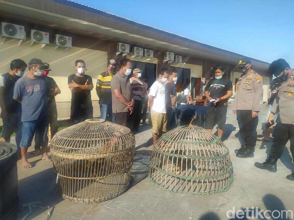 Judi Sabung Ayam di Sidoarjo Digerebek, 13 Pejudi Diamankan