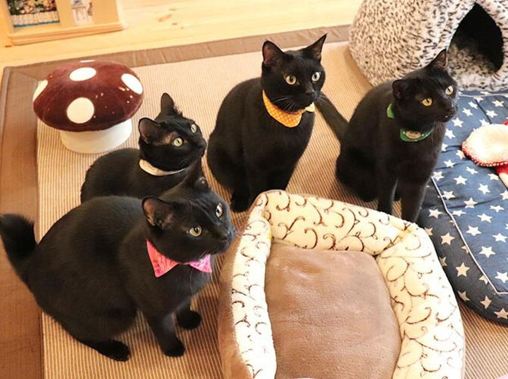 Nekobiyaka, Kafe Khusus Kucing Hitam Satu-satunya di Dunia