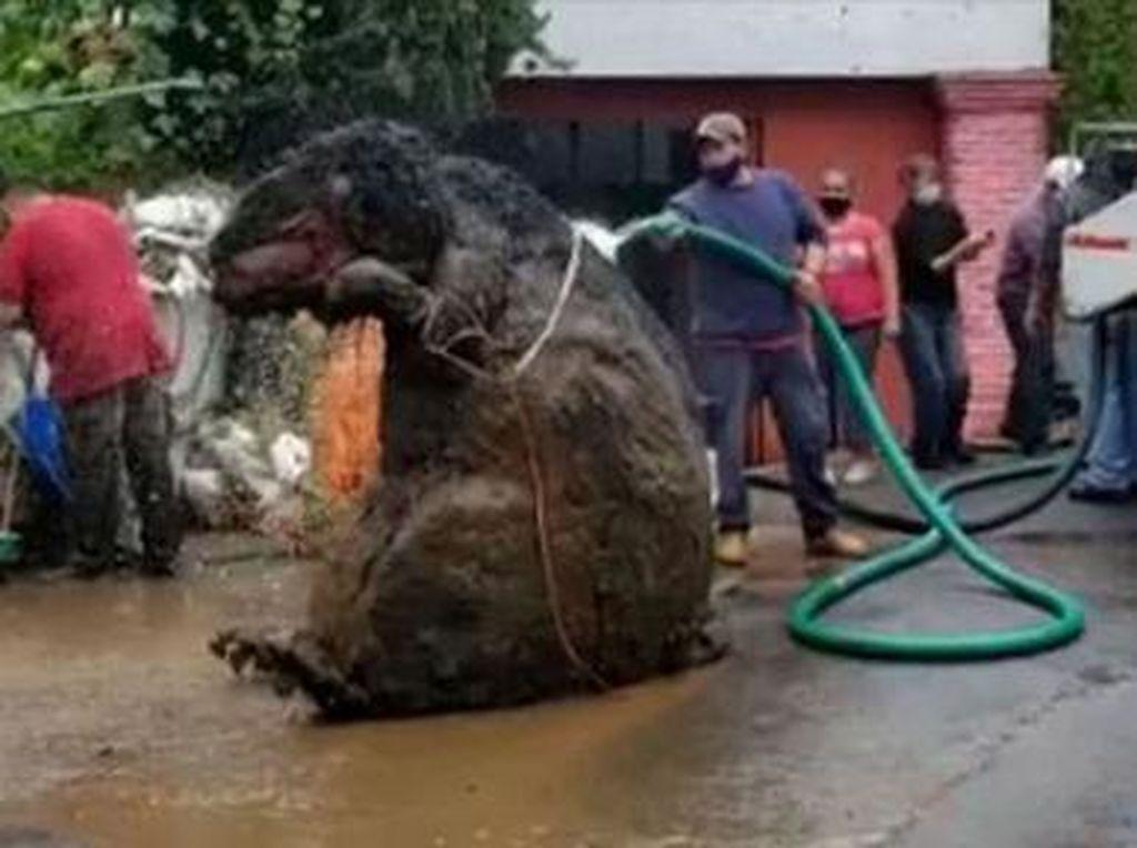 Oktober: Penemuan Tikus Got Raksasa - Potensi Tsunami Jawa