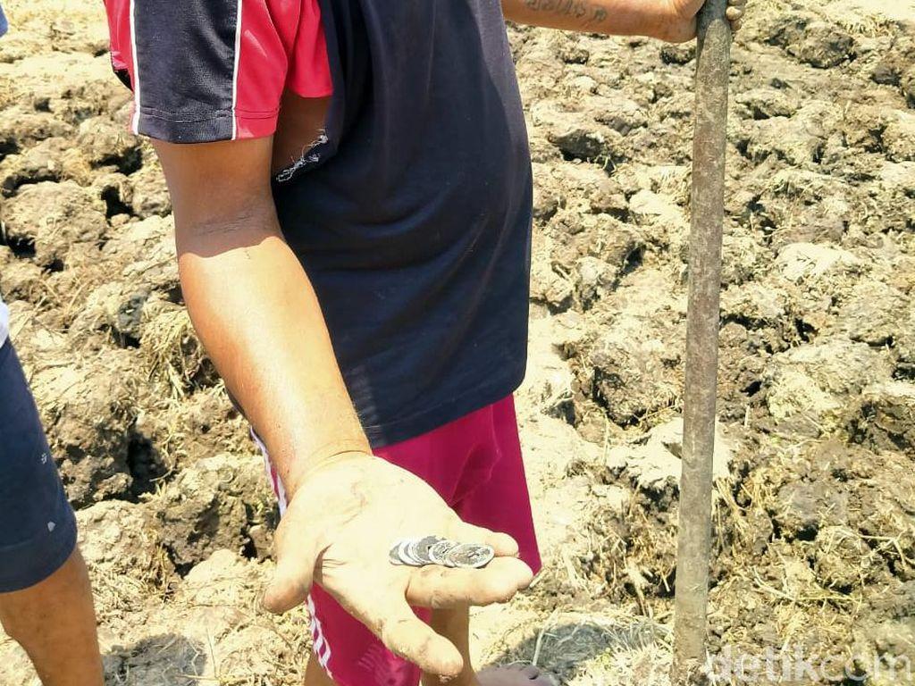 Warga Jombang Ramai-ramai Berburu Uang Kuno di Sawah, 1 Kg Dihargai Rp 100 Ribu