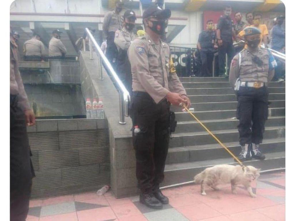 Gemas! Viral Polisi Bawa Kucing Pelacak di Tengah Demo, Ternyata...