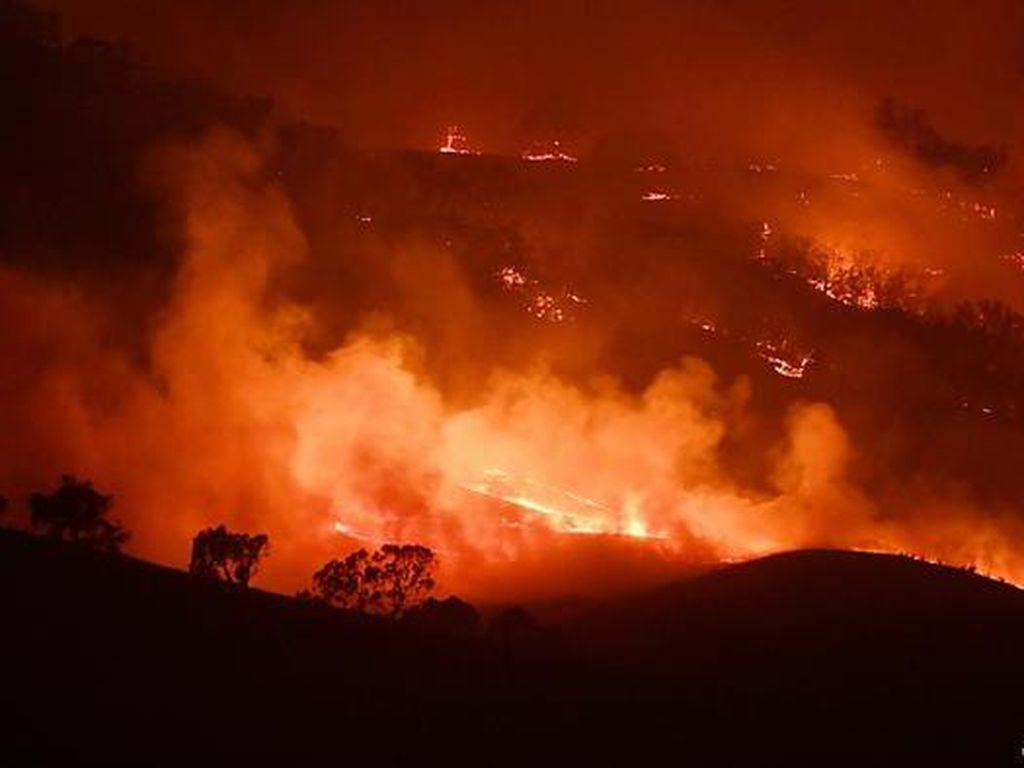 71 Rumah Rusak Parah Akibat Kebakaran Hutan Australia Saat Lockdown