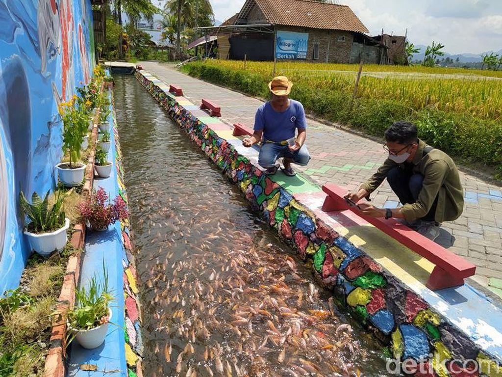 Magelang Punya Eks Budidaya Ikan Tawar Terbesar di Jateng