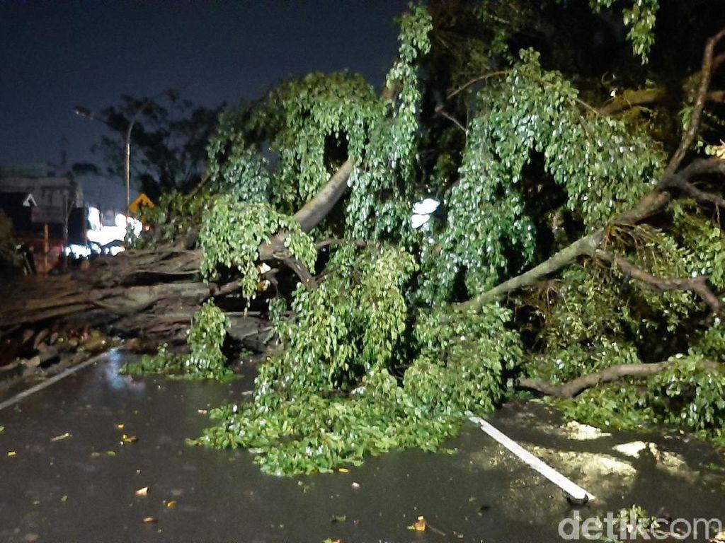 Tertimpa Pohon Tumbang Depan TMP Bogor, Pedagang Nangka Dirawat
