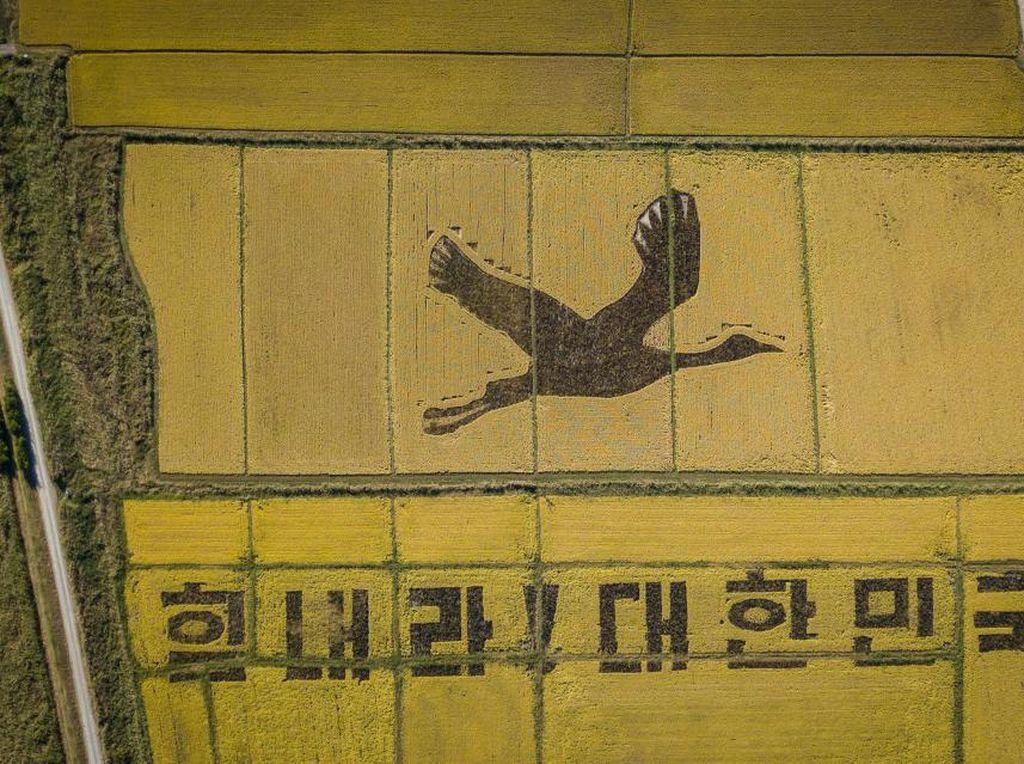Lewat Bangau Raksasa di Sawah, Korea Kirimkan Semangat Lawan Corona