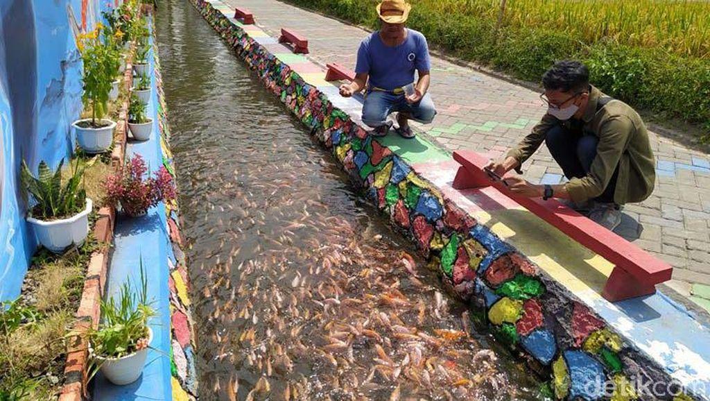 Belajar dan Berwisata Budidaya Ikan Tawar di Desa Ngrajek Magelang
