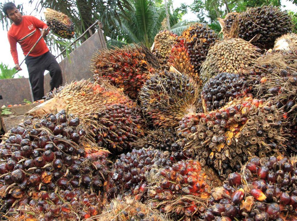 Ini Asal Mula RI Jadi Eksportir Minyak Sawit Terbesar Dunia