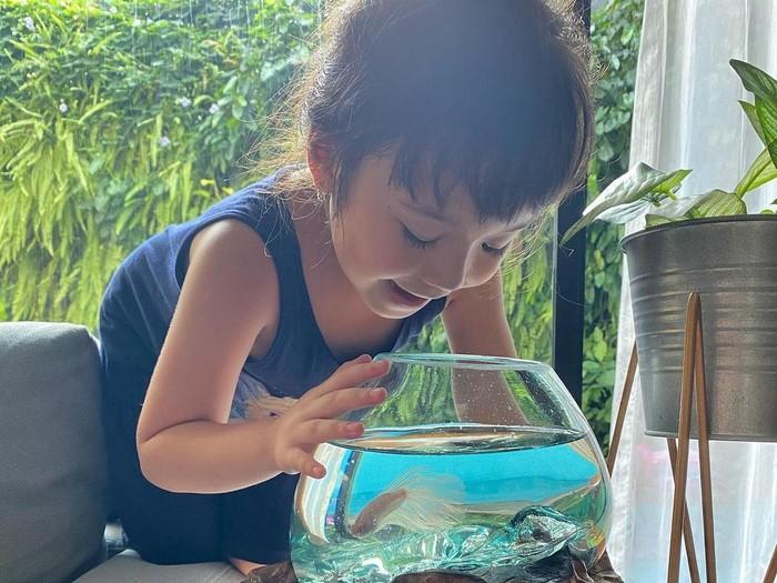 Kisah Gisella Anastasia Kecanduan Pelihara Ikan Cupang Dikala Pandemi Corona