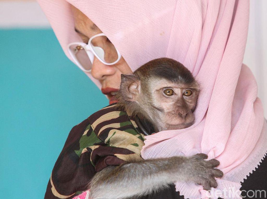 Sulitnya Mengembalikan Monyet Ekor Panjang ke Habitat Aslinya