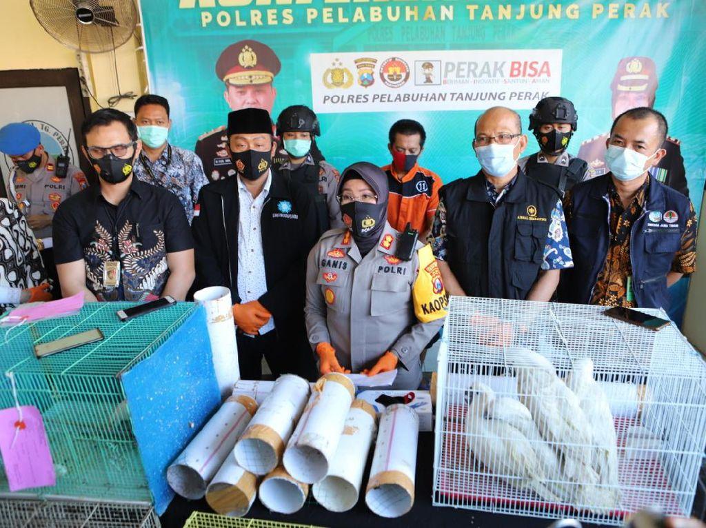 Penyelundupan 131 Burung Dalam Paralon dari Makassar ke Surabaya Digagalkan
