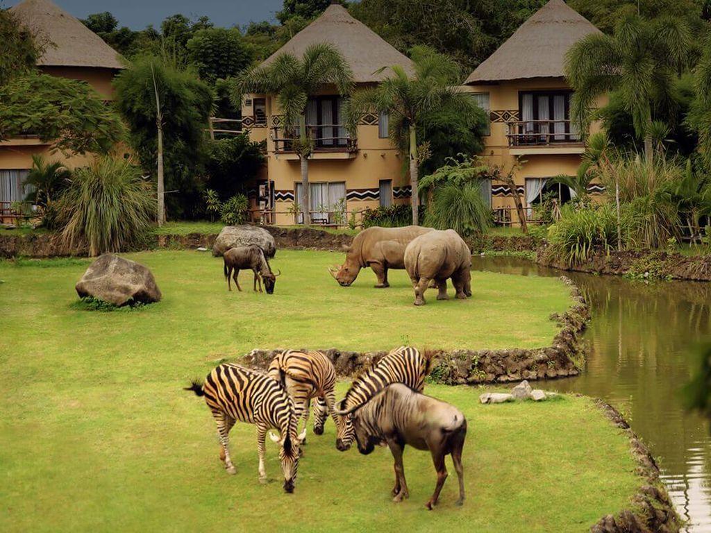 Tempat di Bali Ini Tawarkan Nuansa Afrika