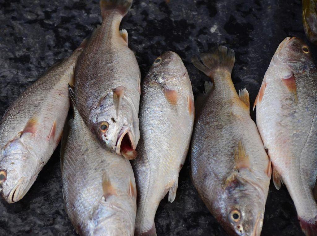 PIO, Upaya Jaga Perekonomian Nelayan di Tengah Pandemi COVID-19
