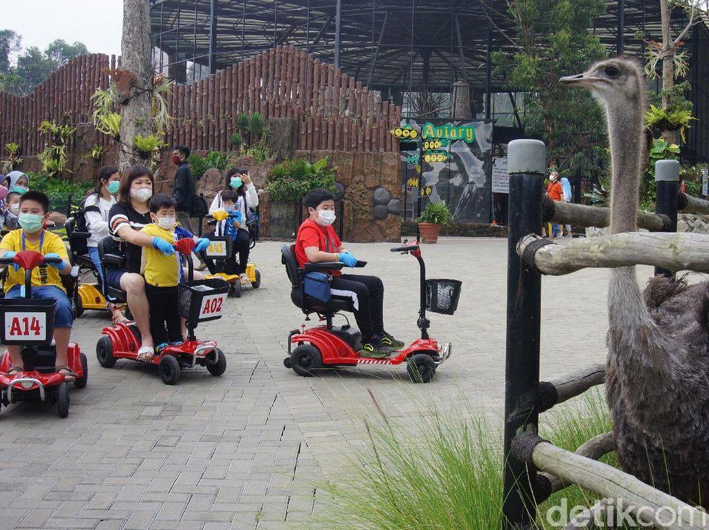 Lembang Park and Zoo Tambah Satwa Berbadan Besar
