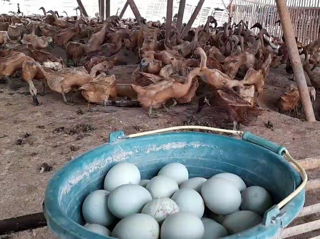Perajin Telur Asin Brebes Beli Bahan Baku dari Luar Daerah, Kenapa?