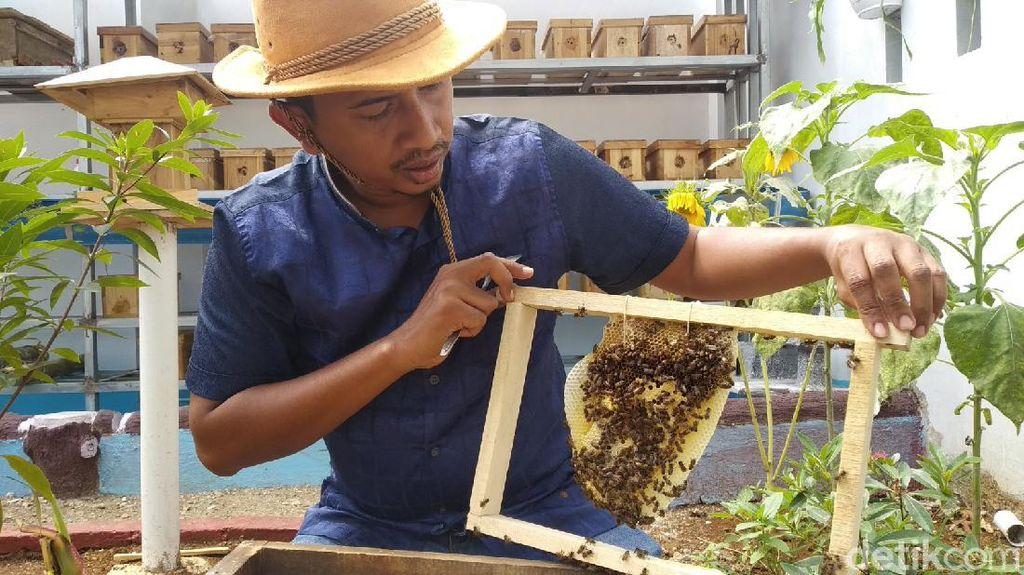 Dear Milenial, Budi Daya Lebah Tanpa Sengat Bisa Jadi Pilihan Usaha