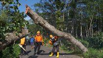 Seorang Pemotor Tewas Tabrak Pohon Tumbang di Semarang