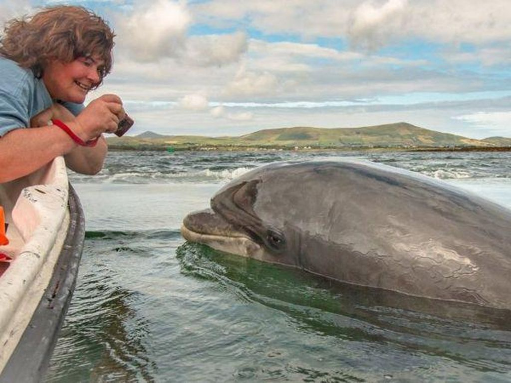 Lumba-lumba Kesayangan Hilang Bikin Kehebohan Besar