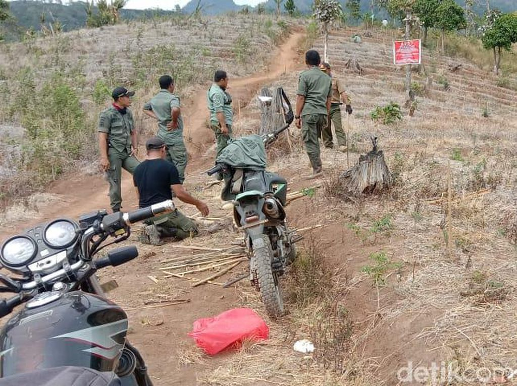 Puluhan Hektar Pohon di Lereng Wilis Gundul, Ini Kata Perhutani Kediri