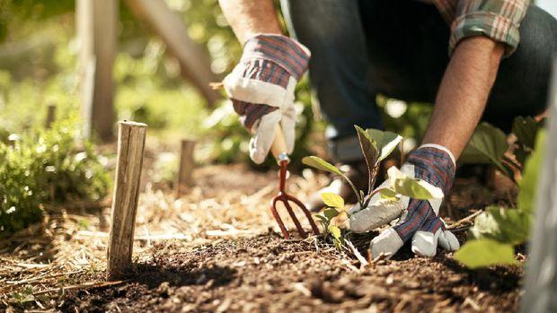 ilustrasi sarung tangan berkebun