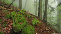 Penelitian di Hutan Purba Terakhir Eropa