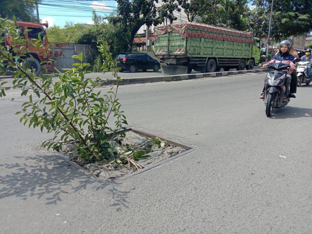 Cegah Pemotor Jatuh, Warga Tanam Pohon di Lubang Jalan Yos Sudarso Medan