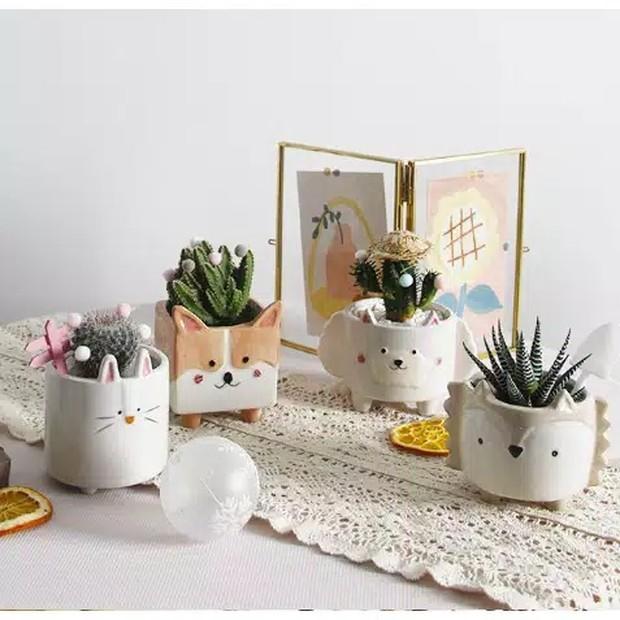 Pot-pot lucu yang dijual Dreamer House cocok buat kamu yang hobi menanam kaktus mini!