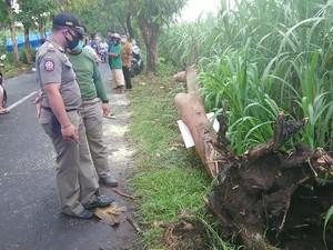 Coba Hindari Pohon Tumbang, Biker Tulungagung Ini Tewas Terjatuh