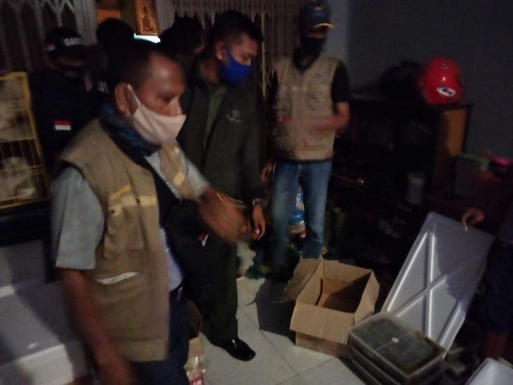 Jual Ribuan Labi-labi Moncong Babi, Pria di Sulsel Ditangkap
