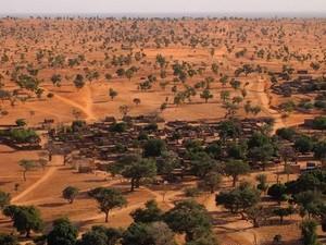 Ada Ratusan Juta Pohon di Gurun Sahara, Tim Ilmuwan Hitung Satu Per Satu