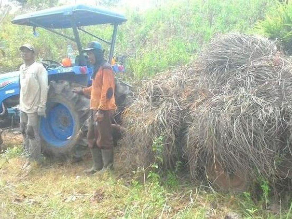 Berkat Hilirisasi, Kini Petani Solok Bisa Ekspor Minyak Sereh Wangi