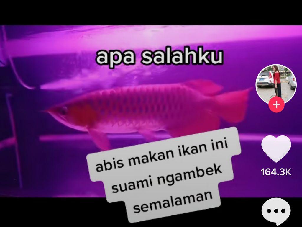 Goreng Ikan Red Arwana, Wanita Ini Curhat Suaminya Ngambek