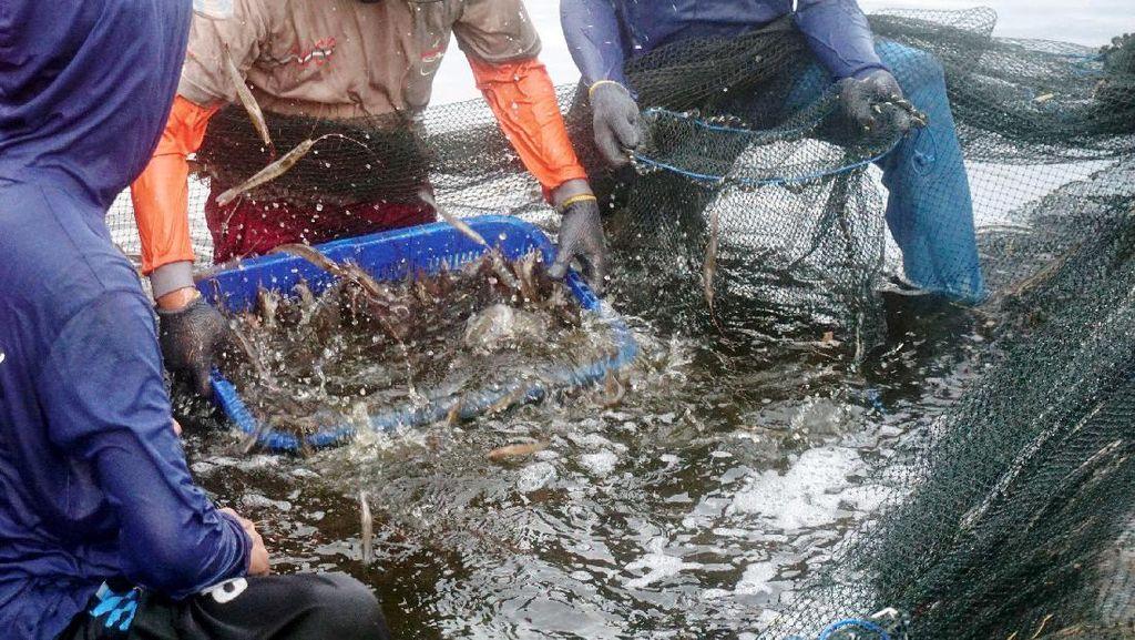 Saat IoT Bantu Tingkatkan Kualitas Budidaya Ikan dan Udang