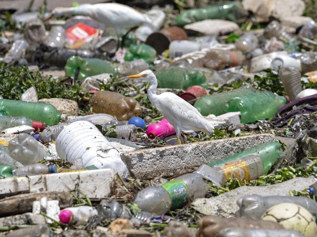Ambisi Membersihkan Sungai Paling Tercemar di Brasil