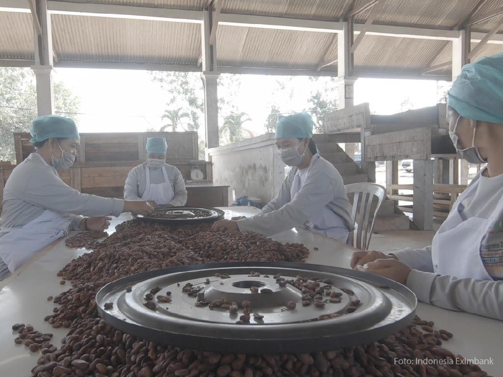 Top! Petani Kakao Tembus Ekspor ke Belanda di Tengah Pandemi
