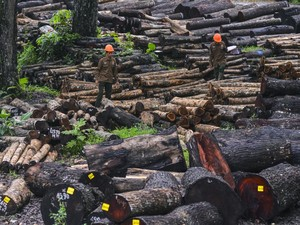 Ngeri! Investasi Jabon Makan Korban 124 Ribu Orang dan Rugi Rp 378 M