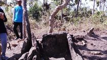 Dilema Penyelamatan Makam Orang Kalang yang Dirusak Pemburu Bekal Kubur