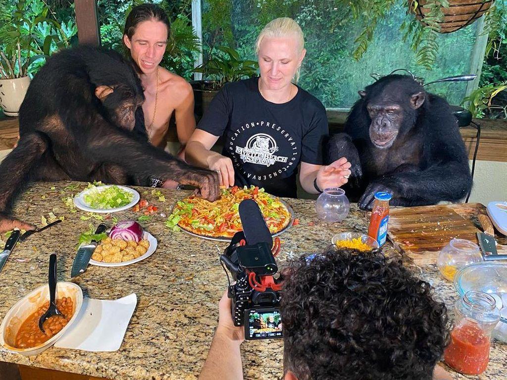 Gemas! Tiga Simpanse Doyan Makan Ini Jadi Bintang di Instagram