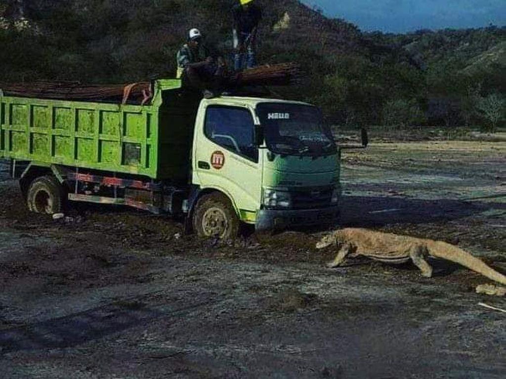 Travel Influencer Soroti Pembangunan Jurassic Park Komodo