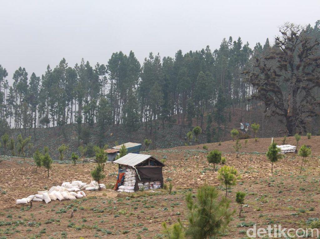 BPBD Ungkap Perambahan Hutan Brebes: Hutan Lindung Terang Benderang