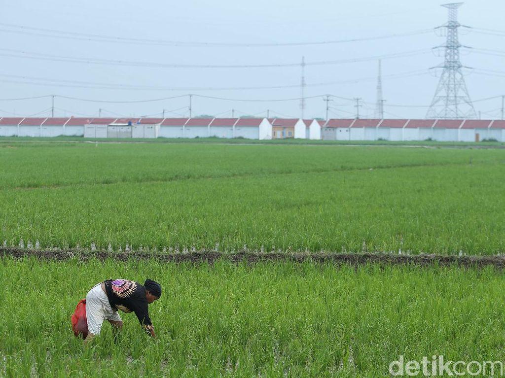 Indonesia Resesi, Sektor Pertanian Masih Tumbuh 2,15%