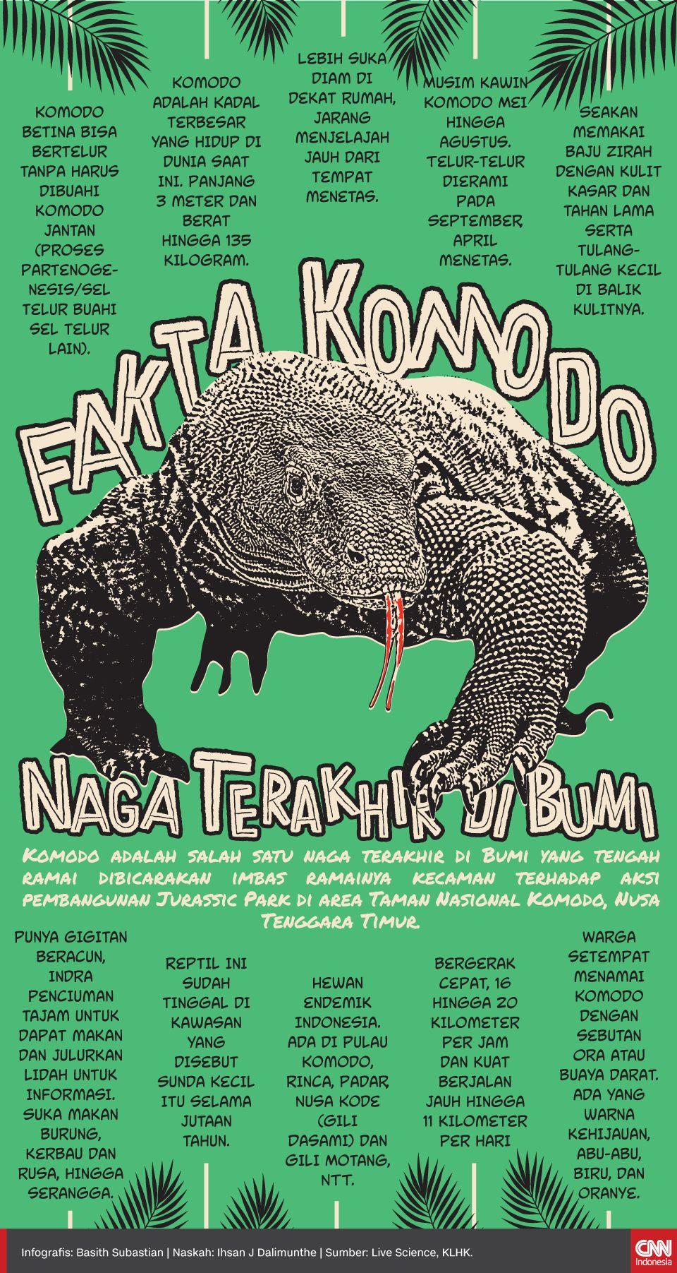Infografis Fakta Komodo, Naga Terakhir di Bumi
