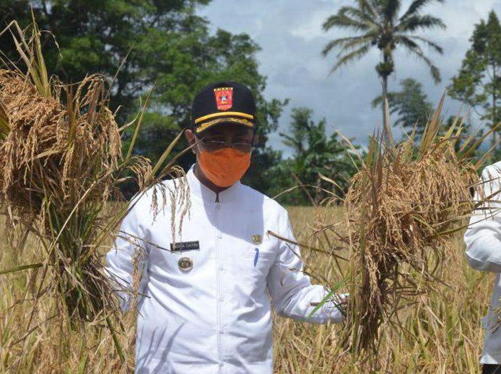 Sektor Pertanian Jadi Prioritas Program Kerja Nasrul Abit-Indra Catri