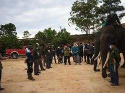Hindari Konflik dengan Manusia, Gajah Liar di Riau Dipasang GPS