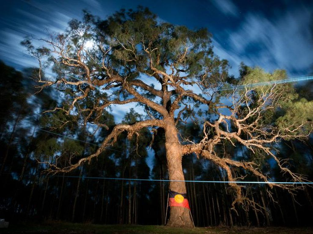 Pohon Keramat Suku Aborigin Ditebang Demi Pembangunan Jalan Raya
