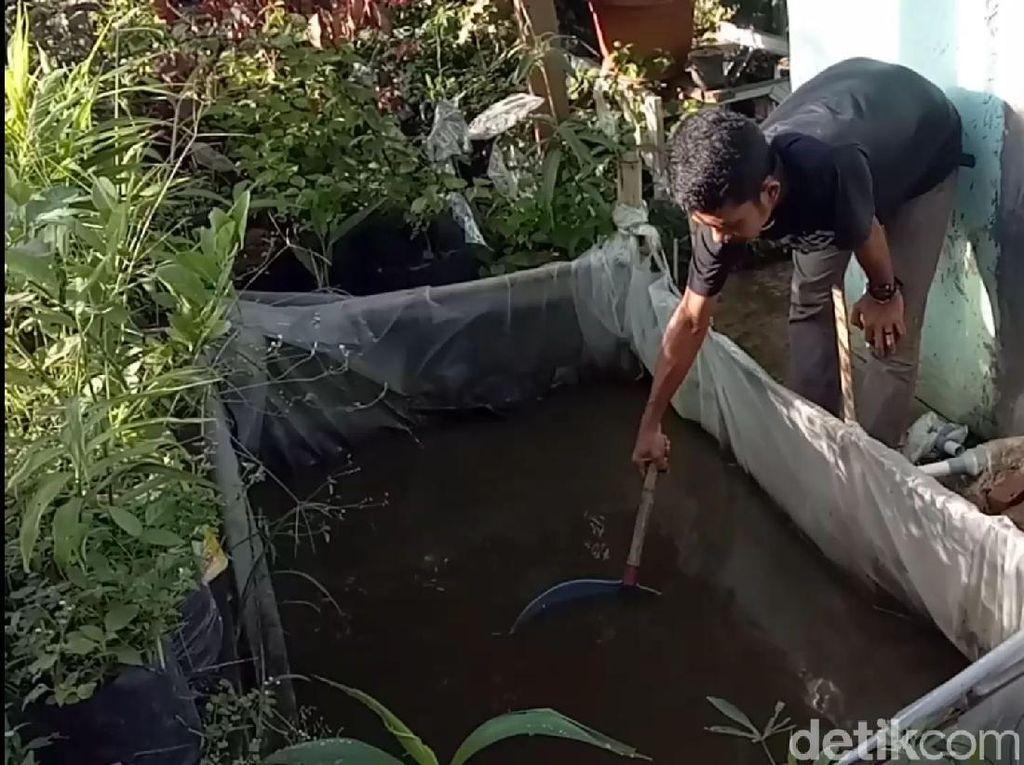 Kisah Mahasiswa Sumedang Raup Untung dari Budidaya Ikan Lele