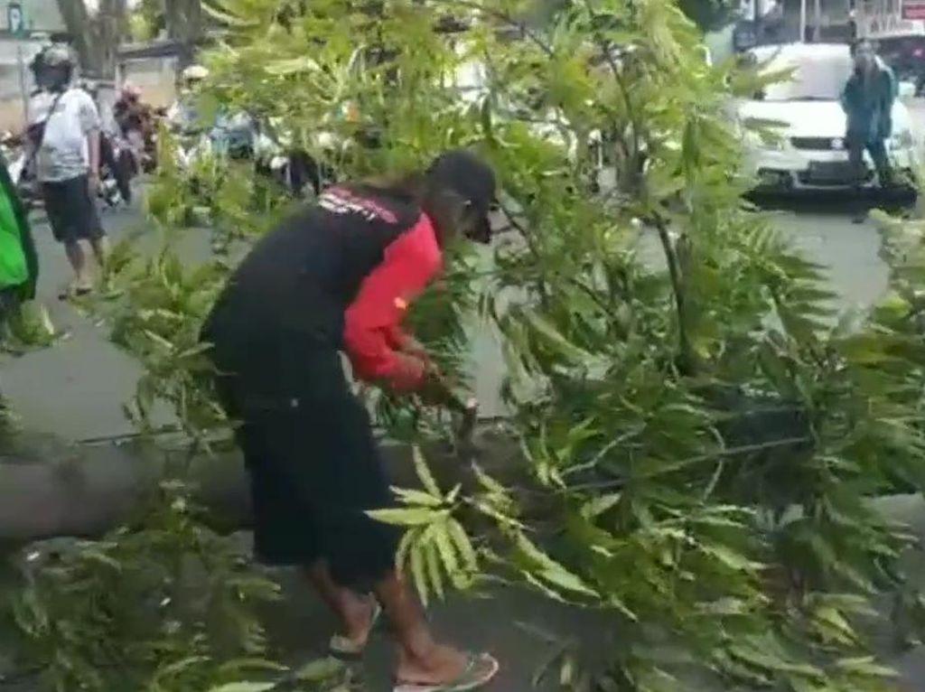 Pohon Tumbang Dilanda Angin Kencang Timpa Biker di Pasuruan