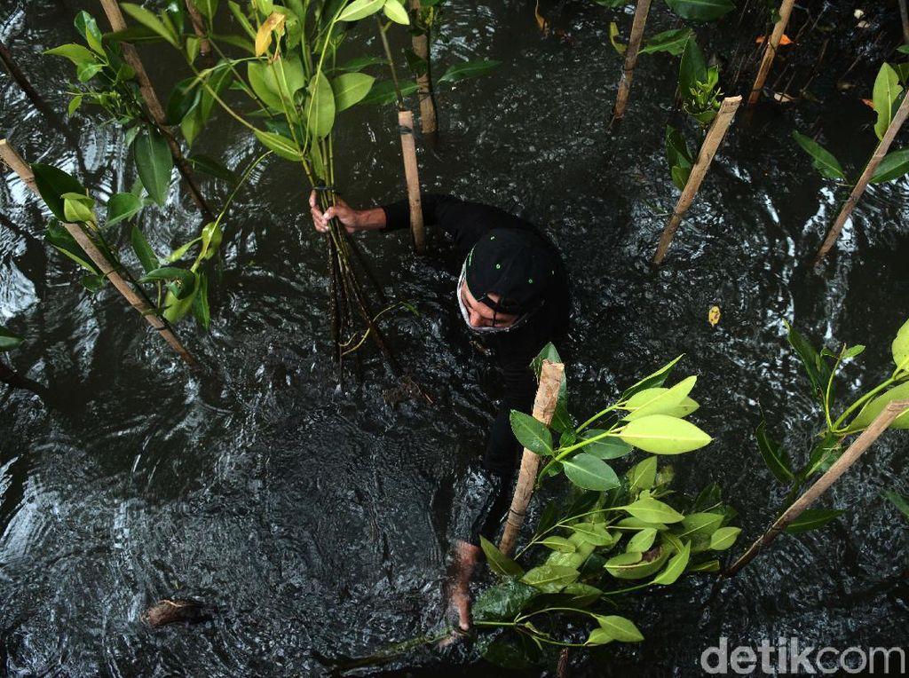 Aksi Tanam Mangrove untuk Lindungi Jakarta