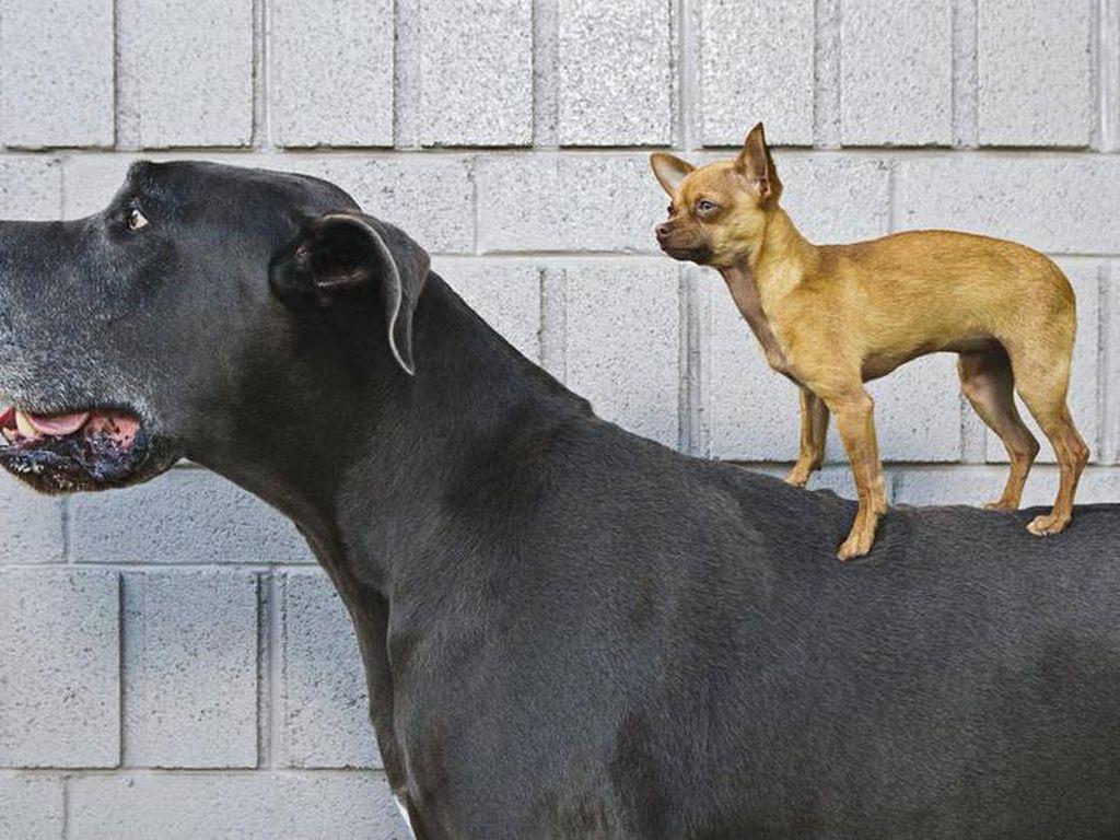 Studi DNA Ungkap Anjing adalah Sahabat Tertua Manusia